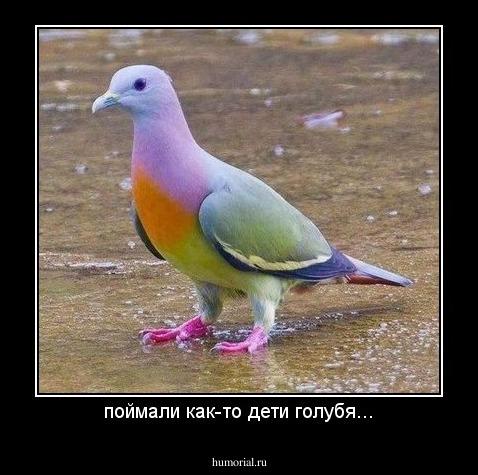 Как поймать голубя своими руками
