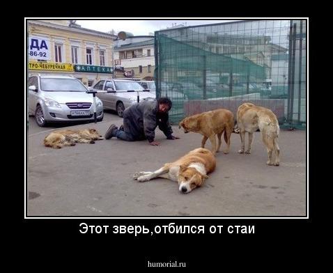 Отбиться от собак во сне