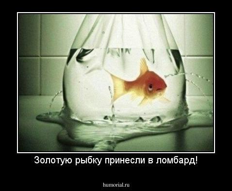 демотиваторы про золотую рыбку ингредиент также