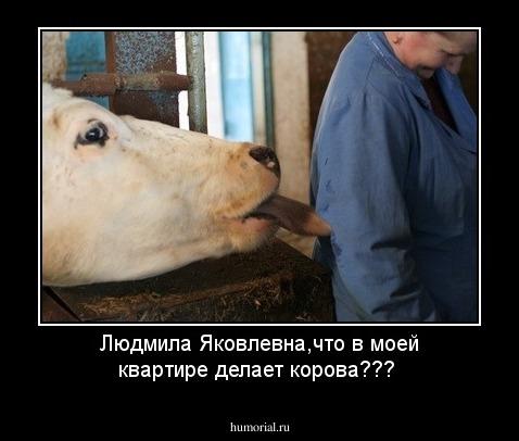 Игра котуха как сделать корову