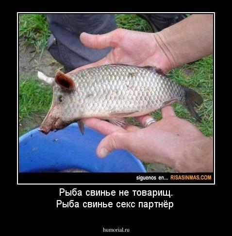Рыбы в сексе