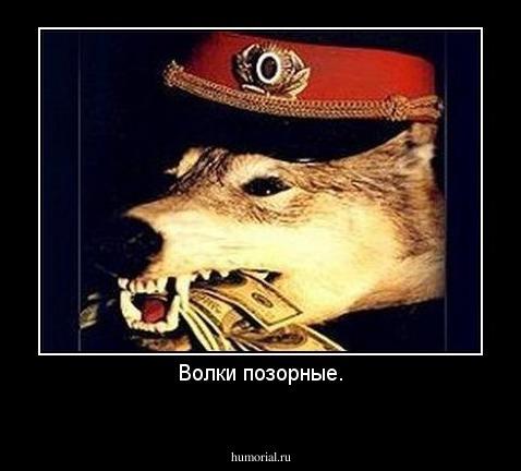 Новый имидж Натальи Поклонской (фото). Поклонская и Высочанская - это как лебедь и жирная амёба - Страница 2 Dem_306472