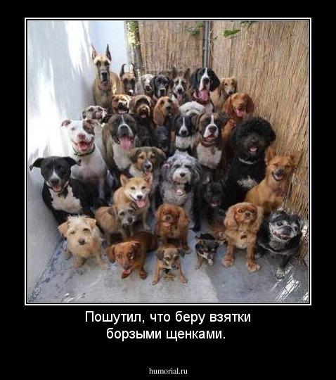 Замначальника Главного следственного управления Нацполиции Бут не указал в декларации дорогостоящую собаку, - НАПК - Цензор.НЕТ 1371