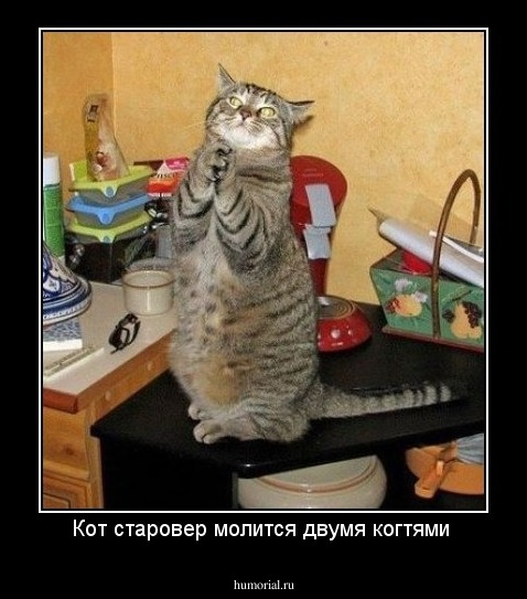 Кот молится фото