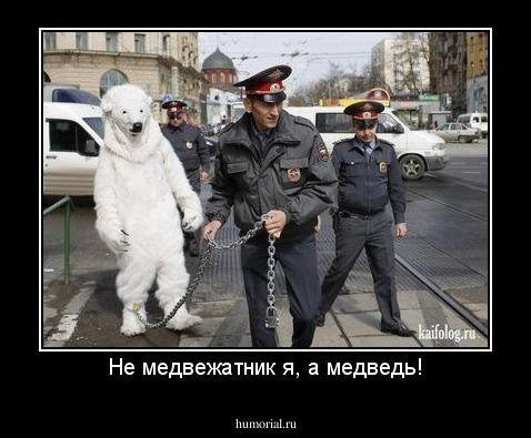 Смешные картинки про медведя гаишника