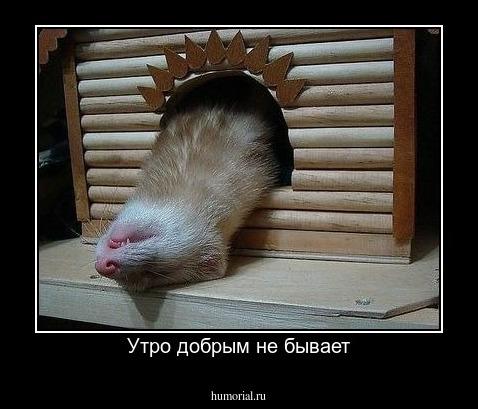 утро добрым не бывает фото приколы концовка русском