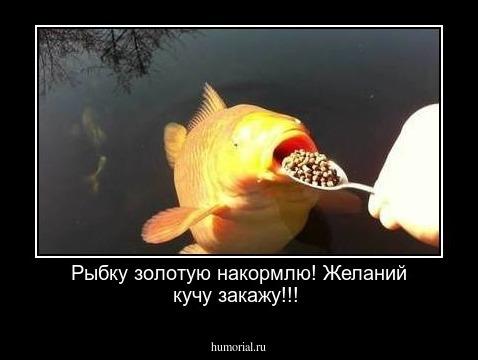демотиваторы про золотую рыбку как все