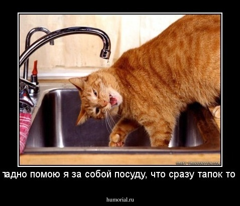 картинки помой посуду за собой