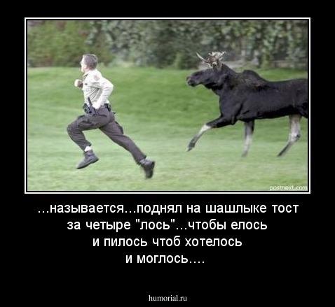 Нацкомиссия проголосовала за внесение лося в Красную книгу, - Семерак - Цензор.НЕТ 2835