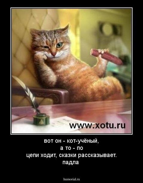 гестагены; котенок хочет в коридор меняются