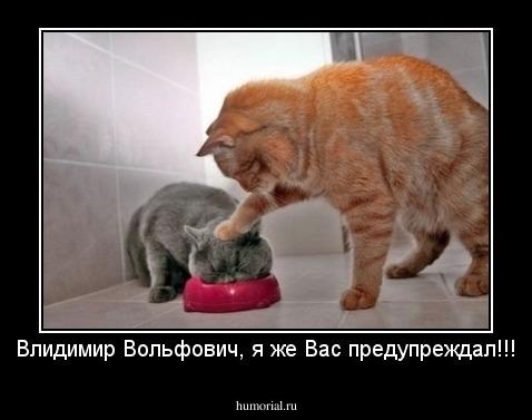 http://humorial.ru/images/dems/74/dem_74037.jpg