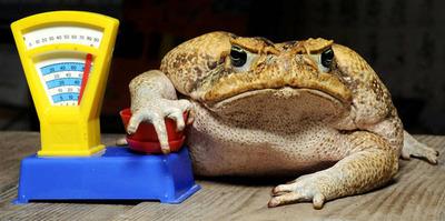 жаба давит