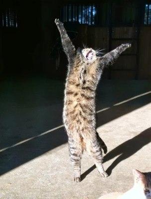 Картинки кот ура