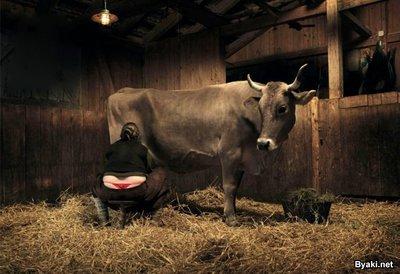 Доит бабу как корову видео фото 503-155