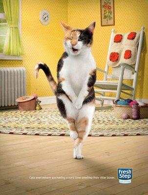 Картинки танцы котов
